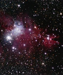 NGC 2264 the Christmas Tree Cluster